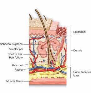 sve o dlakama epilacija